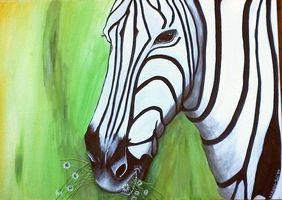 Blümchenkauendes Zebra